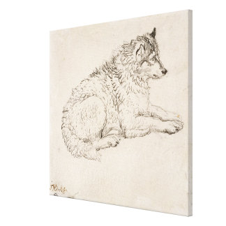 Arctic Dog, Facing Right (pencil on paper) Stretched Canvas Print