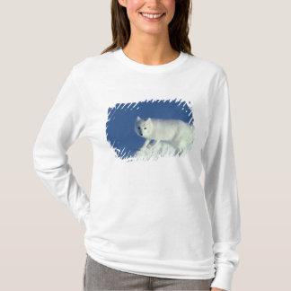Arctic fox Alopex lagopus) An arctic fox, in T-Shirt