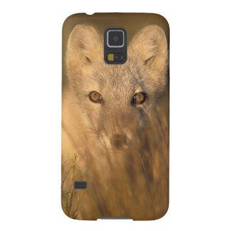 arctic fox, Alopex lagopus, on the 1002 coastal 2 Galaxy S5 Case