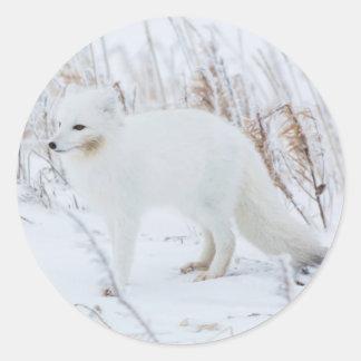 Arctic Fox Classic Round Sticker