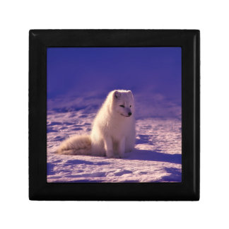 Arctic Fox Gift Box