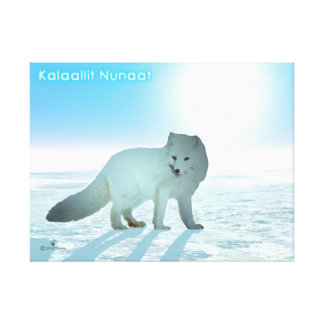 Arctic Fox - Greenland Gallery Wrapped Canvas