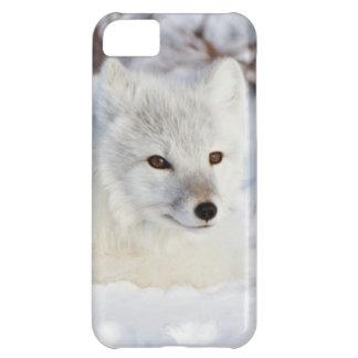 Arctic Fox in winter Case For iPhone 5C