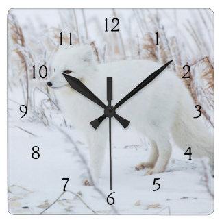Arctic Fox Square Wall Clock