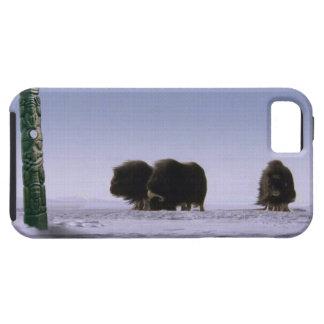 Arctic Musk Oxen & Totem Bovine Wildlife Art iPhone 5 Case