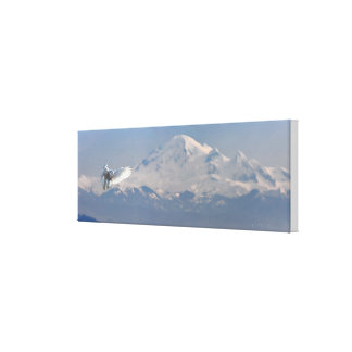 Arctic Snowy Owl flight, mountain and snow Gallery Wrap Canvas