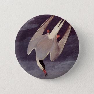 Arctic Tern by John James Audubon, Vintage Birds 2 Inch Round Button