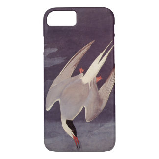 Arctic Tern by John James Audubon, Vintage Birds iPhone 7 Case