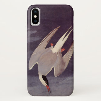 Arctic Tern by John James Audubon, Vintage Birds iPhone X Case