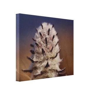 Arctic Tundra Wooly Lousewart Flower Oliktok, AK Canvas Print