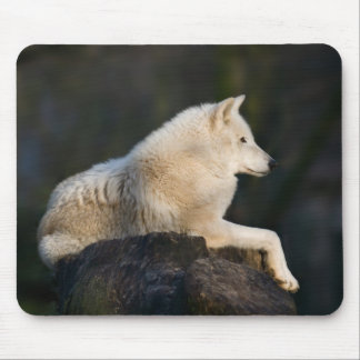 Arctic Wolf Mousepad