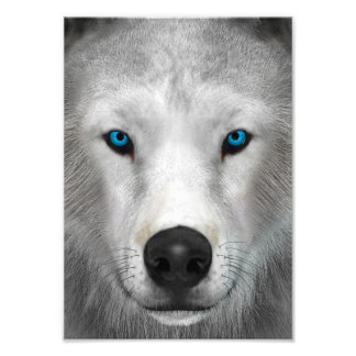 Arctic Wolf Photo Print