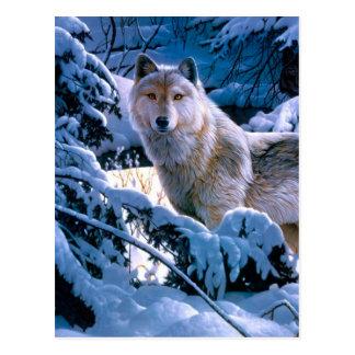 Arctic wolf - white wolf - wolf art postcard