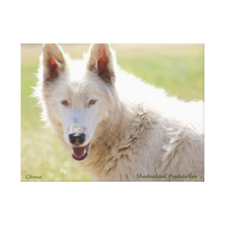Arctic Wolf Wrapped Canvas Canvas Prints