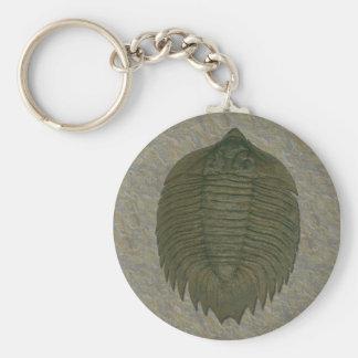 Arctinrus Boltoni Fossil Trilobite Keychain