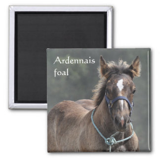 Ardennes draught   horse foal magnet