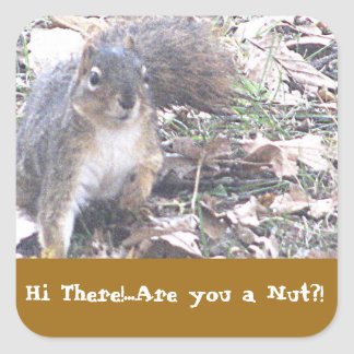 Are you a Nut. Stickers