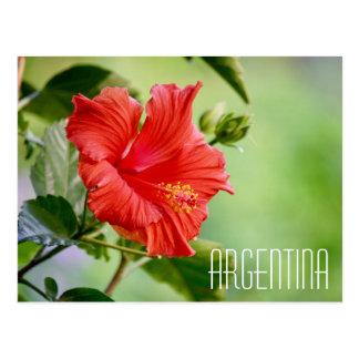 Argentina hibiscus flower postcard