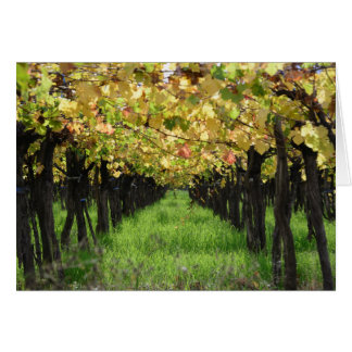 Argentina, Mendoza, Row Of Grape In Vineyard Card