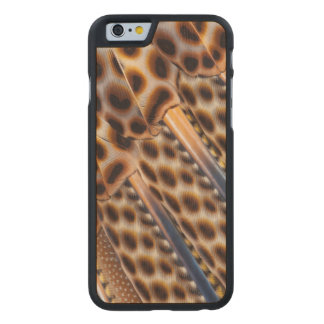 Argus Pheasant Feather Design Carved Maple iPhone 6 Case