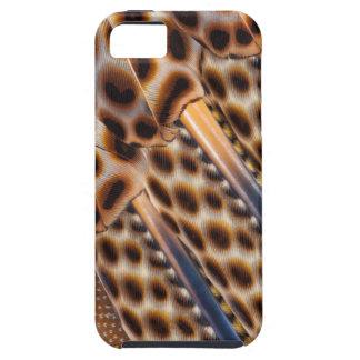 Argus Pheasant Feather Design iPhone 5 Cover
