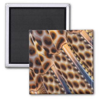 Argus Pheasant Feather Design Magnet