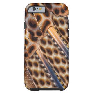 Argus Pheasant Feather Design Tough iPhone 6 Case