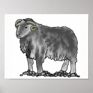 Aries Ram Herdwick Sheep Art Poster