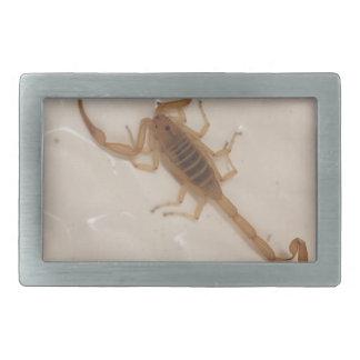 Arizona Bark Scorpion Belt Buckle