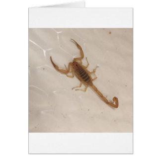 Arizona Bark Scorpion Card