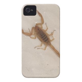 Arizona Bark Scorpion iPhone 4 Cover