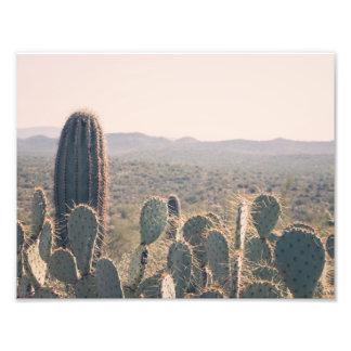 Arizona Cacti   Photo Print