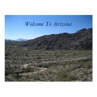 Arizona Desert Beauty Postcard