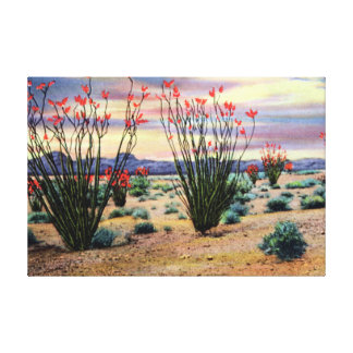 Arizona Desert Ocotillos in Bloom Canvas Print