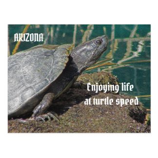 Arizona Enjoying Life at Turtle Speed Vacation Postcard
