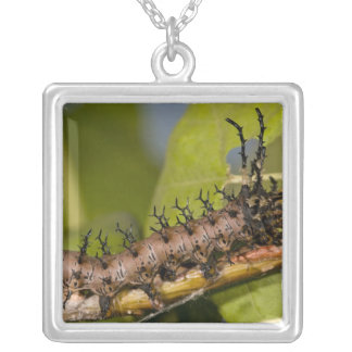 Arizona Horned Devil Caterpillar, Citheronia Silver Plated Necklace