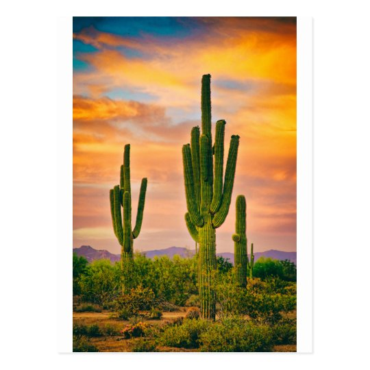 Arizona Life Postcard