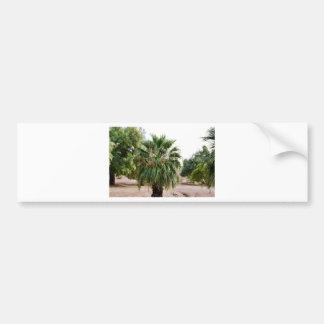 Arizona Palm Bumper Sticker