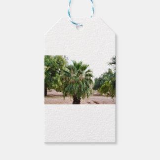 Arizona Palm Gift Tags