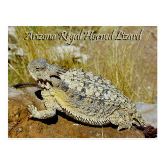 Arizona Regal Horned Lizard Postcard