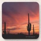 Arizona sunset over saguaro cacti coaster