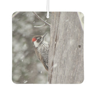 Arizona Woodpecker in the Snow Air Freshener