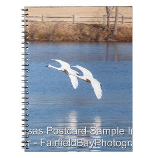 Arkansas Trumpeter Swans Notebook