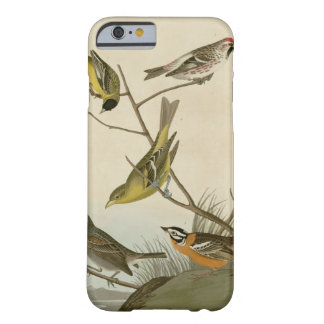 Arkansaw Siskin, Mealy Red-poll, Louisiana Tanager Barely There iPhone 6 Case