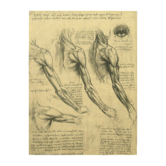 Arm and Shoulder Anatomy by Leonardo da Vinci Wood Wall Decor