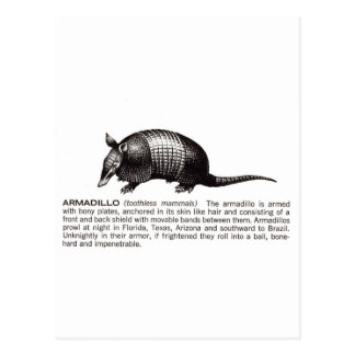 armadillo postcard