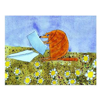 Armadillo Post Card