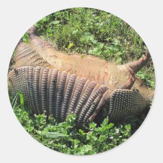 Armadillo Road Kill - Dasypodidae Round Sticker