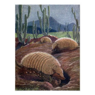 Armadillos by Louis Sargent, Vintage Wild Animals Poster