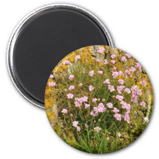 Armeria maritima pink sea growing on a cliff 2 inch round magnet